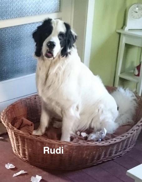 Rudi – Version 2